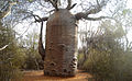 The Teapot - Rena la Botanical park.jpg