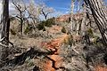 The Trail in the Kolob Canyons, Walk to the Kolob Arch (Zion National Park) (3440693508).jpg