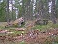 The Warlocks Stone, Sluie Woods - geograph.org.uk - 30400.jpg