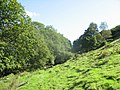 The Wooded North-East Slope of Foel - geograph.org.uk - 241035.jpg