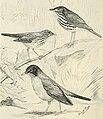 The birds of Illinois and Wisconsin (1909) (14569296807).jpg