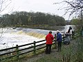 The cauld by the Philiphaugh Salmon Viewing Centre - geograph.org.uk - 618657.jpg