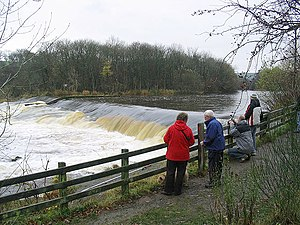 Atlantic salmon - Fish ladder for Atlantic salmon constructed in the middle of a large weir