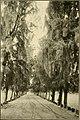 The ornamental trees of Hawaii (1917) (14763600364).jpg