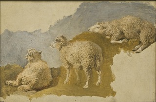 Three Sheep. Study