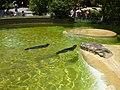 Tiergarten, Berlin, Germany - panoramio (60).jpg