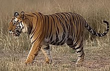Punjabi/Vocabulary/Animals - Wikibooks, open books for an