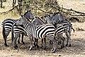 Together we are stonger Masai Mara Kenya (20475628279).jpg
