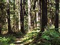 Tongass National Forest 535.jpg
