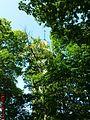 Toranj iz šume - panoramio.jpg