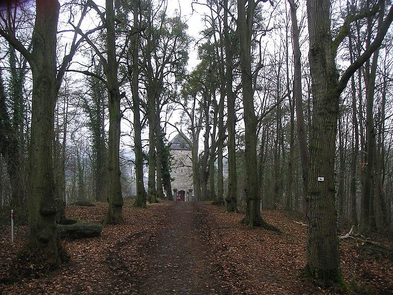 Tour Saint-Martin depuis le sous-bois, Comblain-au-Pont, Belgium