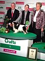 Toy group winner, King Charles Spaniel, Crufts 2013.jpg