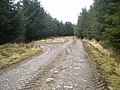 Track junction in the forest - geograph.org.uk - 1775219.jpg