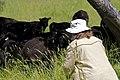 Tracking Down a Lamb (5873286666).jpg