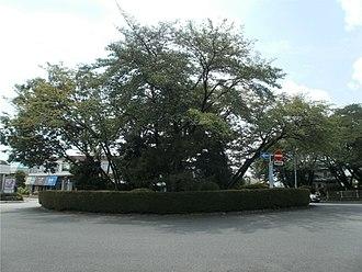 Whisper of the Heart - Sakuragaoka Park (Tama, Tokyo)