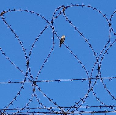 Trame di libertà.jpg