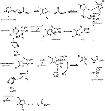 Mechanism of fructose-6-phosphate to xylulose-5-phosphate in transketolase active site