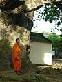 Tree soul ethnic.......JPG