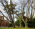 Trees, Oldway Mansion, Paignton - geograph.org.uk - 699541.jpg