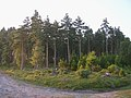 Trees in the Longdown Inclosure, New Forest - geograph.org.uk - 25411.jpg