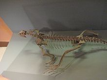 Archosauromorpha
