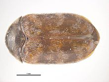 Museum Integrated Pest Management Wikipedia
