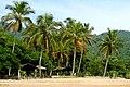 Tropical (34365854).jpeg