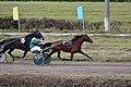 Trotter racing (6249318391).jpg