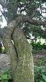 True love of a tree.jpg