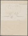 Trygon pastinaca - 1700-1880 - Print - Iconographia Zoologica - Special Collections University of Amsterdam - UBA01 IZ14200093.tif