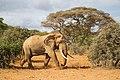 Tsavo-phant (Kenya, Day 2).jpg