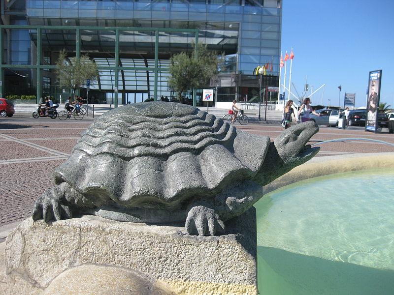 File:Turtle Cattolica.JPG