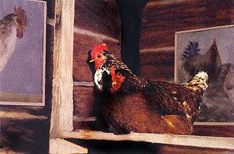 Jacek Tylicki - Installation Chicken Art,  Now Gallery, New York City, 1987