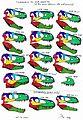 Tyrannosaurus skull comparison.jpg