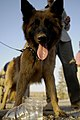 U.S. provides bomb dogs, training to Iraqi police DVIDS195632.jpg