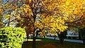 UNWE autumn.jpg