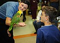 US Navy 110907-N-VV797-034 Nicole Gossler, from the San Diego Zoo, shows a Double Yellow-Headed Amazon Parrot named Rio to a pediatrics patient.jpg