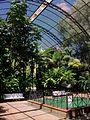 Umbracle del Jardí Botànic de València, interior.JPG
