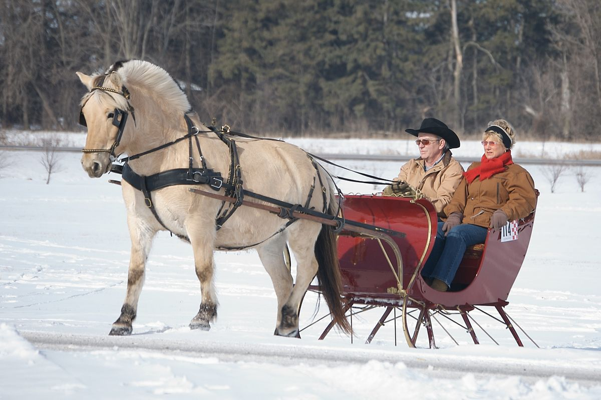 Holiday Horse Drawn Sleigh Rides | Fernie.com | Fernie Blogs |Horse Drawn Sleigh Rides Christmas