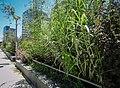 Variety of plants of Allee Arthur Rimbaud.jpg