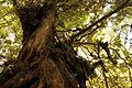 Vegetacion de Bosque Tropical en Costa Rica 012.jpg