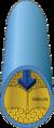 Veia-CorteTransversal.png