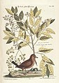 Verzameling van uitlandsche en zeldzaame vogelen (Tab. LII) (7894198874).jpg
