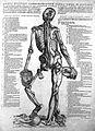"Vesalius ""Suorumde humani"", 1543; male, muscles Wellcome L0018956.jpg"