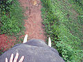 View from an elephant ride in Chiang Rai Province 2007-05.JPG
