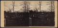 View in Greenwood Cemetery, by S. Beer 2.png