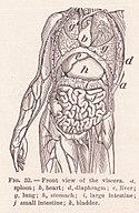 View of Viscera Page 82.jpg