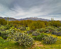 View of desert and Four Peaks (Tonto National Forest).jpg
