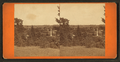 View of the Spring Grove cemetery, from Robert N. Dennis collection of stereoscopic views 3.png