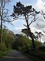 View of the road through Church Path Wood - geograph.org.uk - 169611.jpg